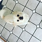 Adopt A Pet :: Cloud (COURTESY POST)