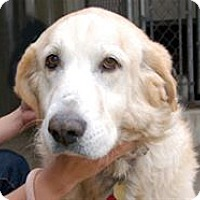 Adopt A Pet :: Jezzy - Mountain Home, AR