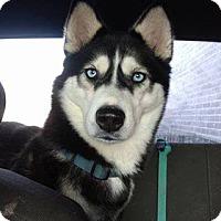Adopt A Pet :: Penny - Cavan, ON