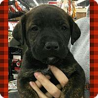 Adopt A Pet :: K-2 - Ringwood, NJ
