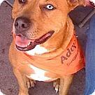 Adopt A Pet :: Bloo