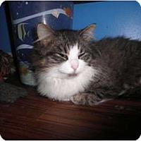 Adopt A Pet :: Garrett - Warren, MI