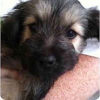 Adopt A Pet :: Romeo - Arlington, TX
