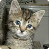 Adopt A Pet :: Agatha Christie - Reston, VA