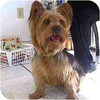 Adopt A Pet :: Trevor - Fayetteville, AR