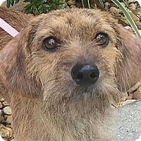 Adopt A Pet :: Tula - Orlando, FL