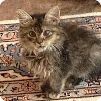 Adopt A Pet :: Glenda - East Hanover, NJ