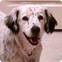 Adopt A Pet :: Dixie-KS - Pine Grove, PA