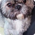 Adopt A Pet :: Pinky