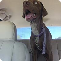 Adopt A Pet :: Becker - Fair Oaks Ranch, TX