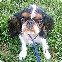 Adopt A Pet :: Hope - Cumberland, MD
