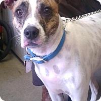 Adopt A Pet :: MAX - Cadiz, OH