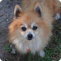 Adopt A Pet :: Karma - conroe, TX