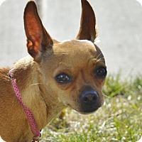 Adopt A Pet :: Sophie - Meridian, ID