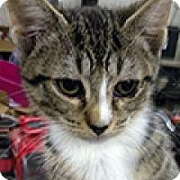 Adopt A Pet :: Allie - Durham, NC
