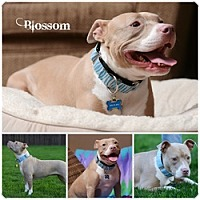 Adopt A Pet :: Blossom - Sioux Falls, SD