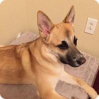 Adopt A Pet :: Katie - Las Vegas, NV