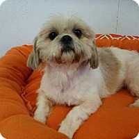 Adopt A Pet :: Jazzy Turner - Urbana, OH