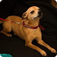 Adopt A Pet :: Milo - Daleville, AL