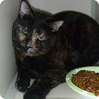 Adopt A Pet :: Missy Jo - Hamburg, NY