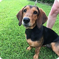 Adopt A Pet :: Emma Lou - Savannah, GA
