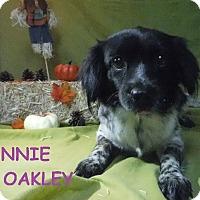 Adopt A Pet :: Annie Oakley - Batesville, AR
