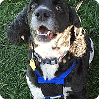 Adopt A Pet :: Kooper=ADOPTION PENDING! - Sacramento, CA