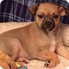 Adopt A Pet :: Taffy