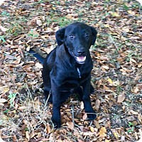 Adopt A Pet :: Jackson-he is a wonderful dog - Pewaukee, WI