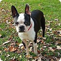 Adopt A Pet :: Chloe - Lisbon, OH
