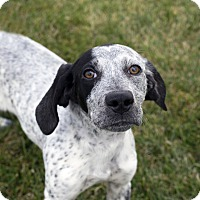 Adopt A Pet :: Akeila - Fremont, NE