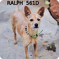 Adopt A Pet :: Ralph - Spring, TX