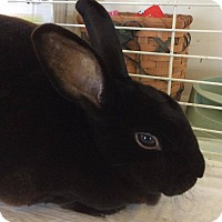 Adopt A Pet :: Lilly - Greenfield, IN