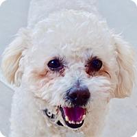 Adopt A Pet :: Sparky - La Costa, CA