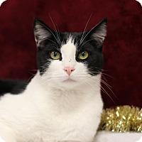 Adopt A Pet :: Jack - $10! - Midland, MI