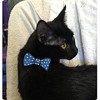Adopt A Pet :: Tonto - Paducah, KY