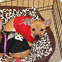 Adopt A Pet :: Sage - Yuba City, CA