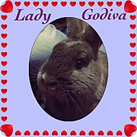 Adopt A Pet :: Lady Godiva - Winnipeg, MB