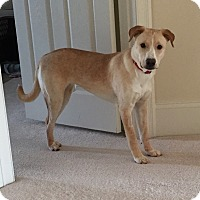 Adopt A Pet :: Purdy - Frederick, MD