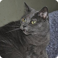 Adopt A Pet :: Mrs. Fields - La Canada Flintridge, CA