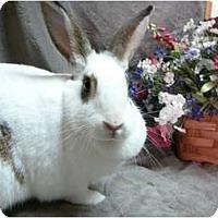 Adopt A Pet :: Bess - Newport, DE