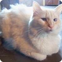 Adopt A Pet :: Radley - Ennis, TX