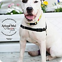 Adopt A Pet :: Holly Golightly - New York, NY