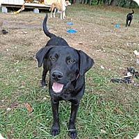 Adopt A Pet :: Macy - Warrenton, NC