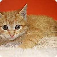 Adopt A Pet :: JUSTIN - SILVER SPRING, MD