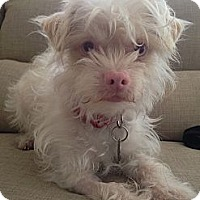 Adopt A Pet :: Falcor - Santa Monica, CA