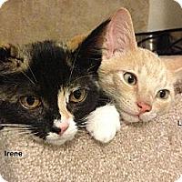 Adopt A Pet :: Irene - Portland, OR
