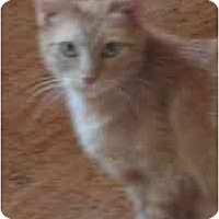 Adopt A Pet :: Ginger - Davis, CA
