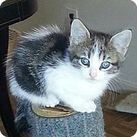 Adopt A Pet :: Debbie - Whitestone, NY