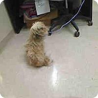 Adopt A Pet :: Rosie - Antioch, IL